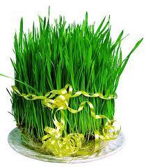 Novruz Bayrami
