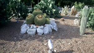 Milli Parkda kaktuslar ekzotik görüntüsü